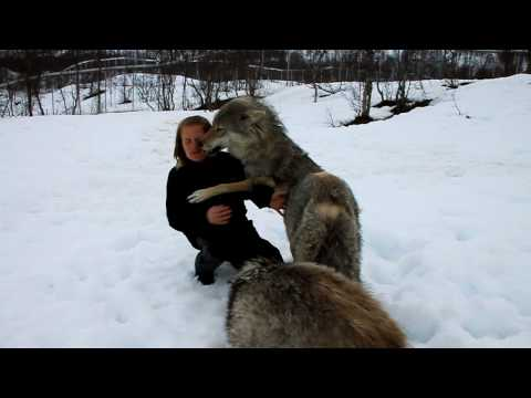 Reunion between Anita and the wolves