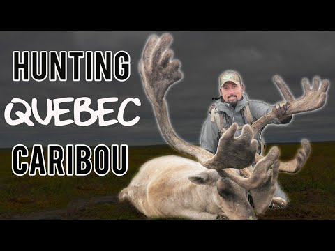 HUNTING REINDEER! Caribou Hunt In Canada