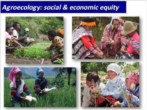 Agroecology Works! - Marcia Ishii Eiteman