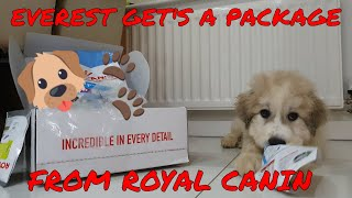 || Everest & Koda || Package From Royal Canin! || UK ||