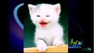 Por qué los gatos ronronean - TvAgro por Juan Gonzalo Angel