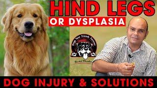 DISCUSS Biggest Injury Of Dog Breeds With Solutions || Hind Legs Or Dysplasia || Baadal  Bhandaari