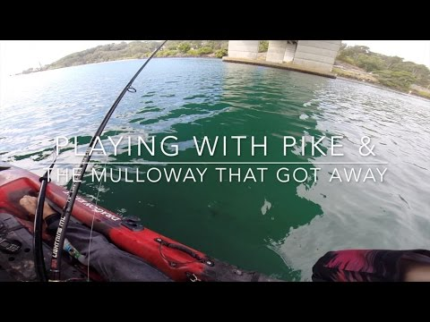 Playing With Pike And The Mulloway That Got Away. Currumbin Creek On Dragon Kayak