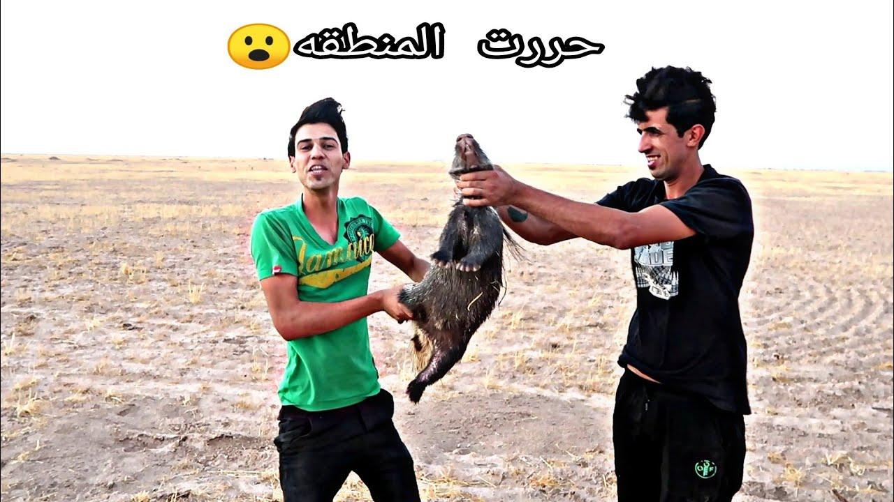 إمساك أخطر حيوان  قاهر الأسود يحمل 5 اشكال/المغامر ابن العراق