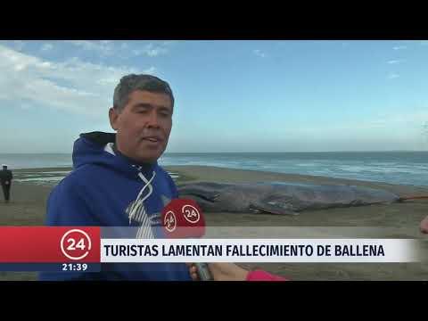 Encuentran ballena azul varada en playa cercana a Punta Arenas