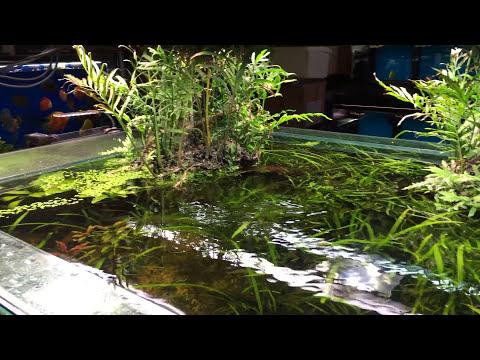 Store Tour: Nature Aquarium