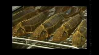 Производство копченой рыбы (Вкусная Рыбка)