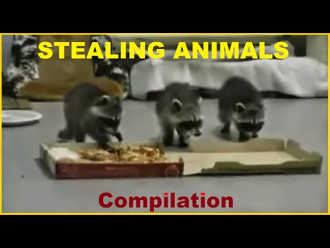 STEALING ANIMALS - Funny DOGS and CATS Compilation 2014 Pt 2