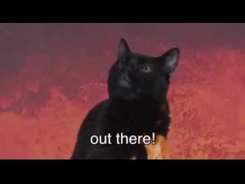 Chipmunks Talking Kitty Cat ♫ Stupid Stupid World ♫