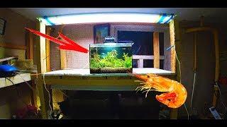 видео Аквариумы для креветок