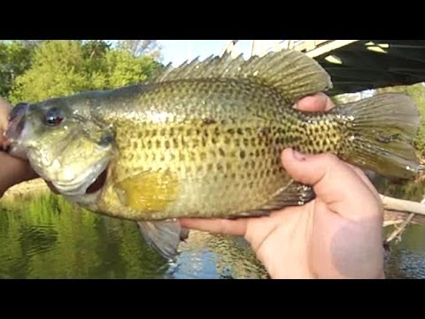 lure fishing #6 - small river jig fishing for rock bass, walleye, Hard Baits