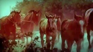 "Lithuanian horse breed: Žemaitukai & Užgavėnių daina ""O tai arklys!"""