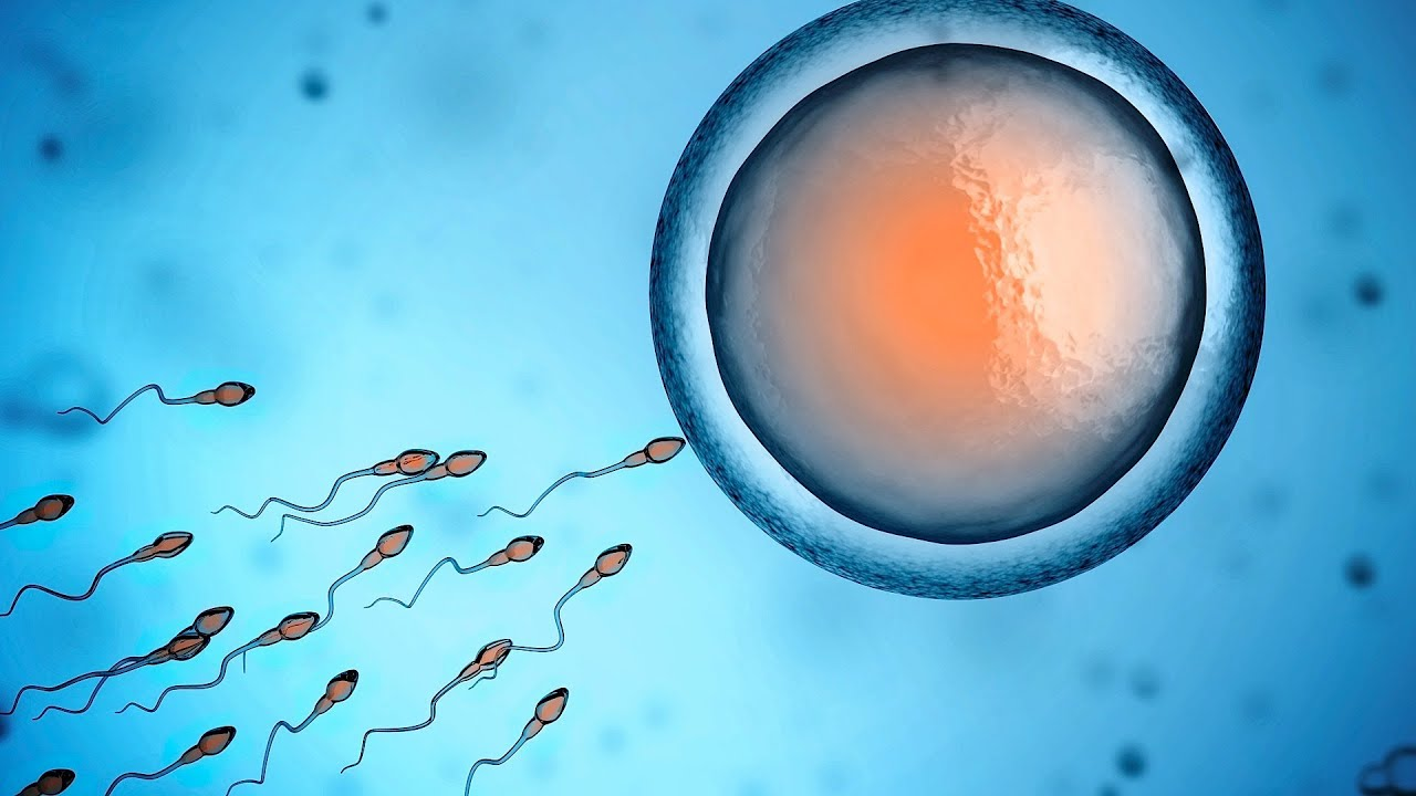 Image result for sperm movement