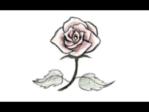 How to draw a beautiful rose flower youtube how to draw a beautiful rose flower mightylinksfo