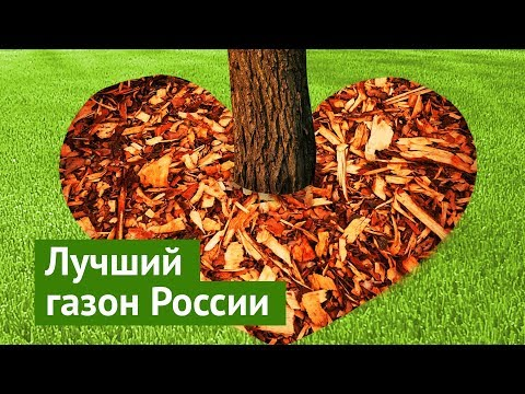 Ролик блогера Ильи Варламова о газоне Окунева