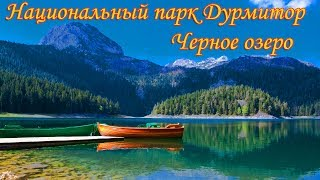 видео Цветы Черногории