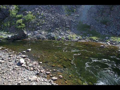 Fly Fishing For Kola Salmon: On Salmon And Becoming A Labrador