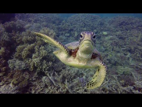 Vlog #76 - Australië - Kuranda, Cairns & het Great Barrier Reef