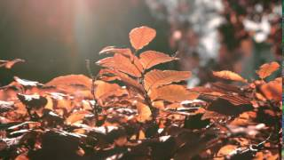 autumn 18- film footage, free download, free stock, clips, video effects