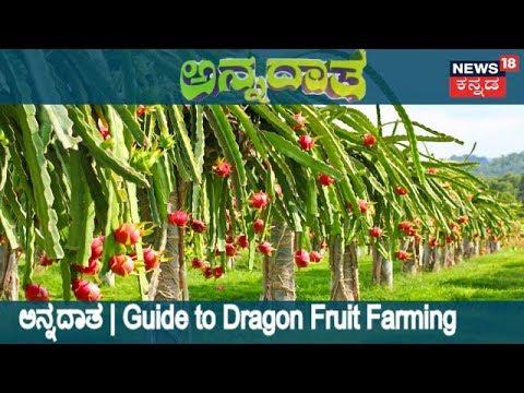 ಅನ್ನದಾತ | Information About Dragon Fruit Cultivation | Aug 14, 2018