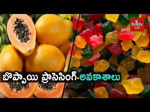 Papaya Processing Guide By Mynampati Sreenivasa Rao    hmtv agri