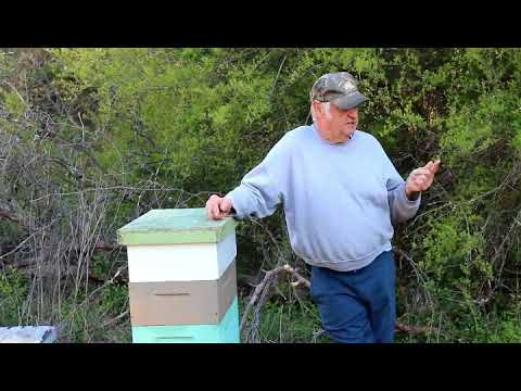Fat Bee Man - Introduction to Beekeeping clips Mp3