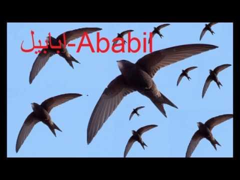 Surah Alfil with urdu audio