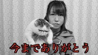 【チャンネル登録よろしくお願いします!】 (セカンドチャンネル) 桜 ...