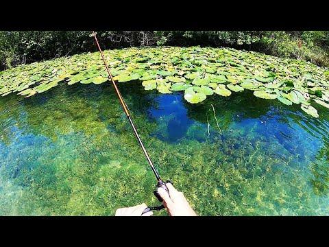 INSANE CREEK FISHING In CRYSTAL CLEAR WATER!!!