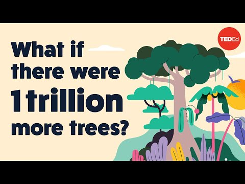 Video image: What if there were 1 trillion more trees? - Jean-François Bastin