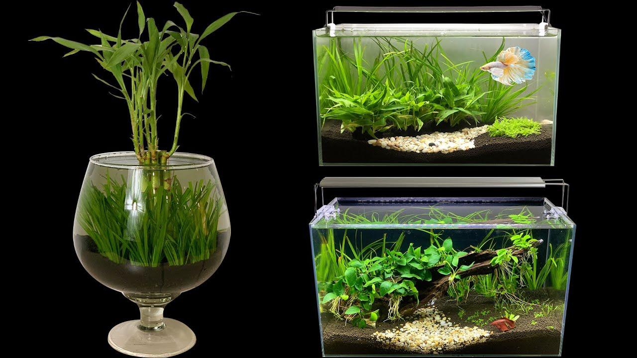 Top 3 DIY - How To Make Mini Planted Aquarium Fish Tank ideas - Mini Betta Aquascape No Co2, Filter