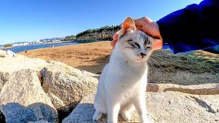 防波堤に行ったら野良猫の兄妹がモフられにきた