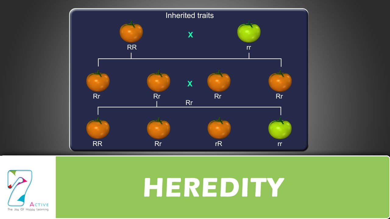 Image result for heredity