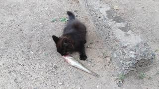Котенок ищет хозяина