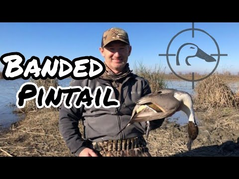 BANDED PINTAIL On Public Refuge! California Public Land Duck Hunting | 1-2-19