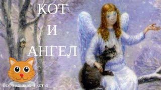 Кот и Ангел. Добрый рассказ.