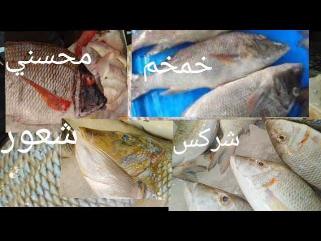 الفرق بين عائلة سمك الشعور وأشكاله علشان محدش يغشك Youtube