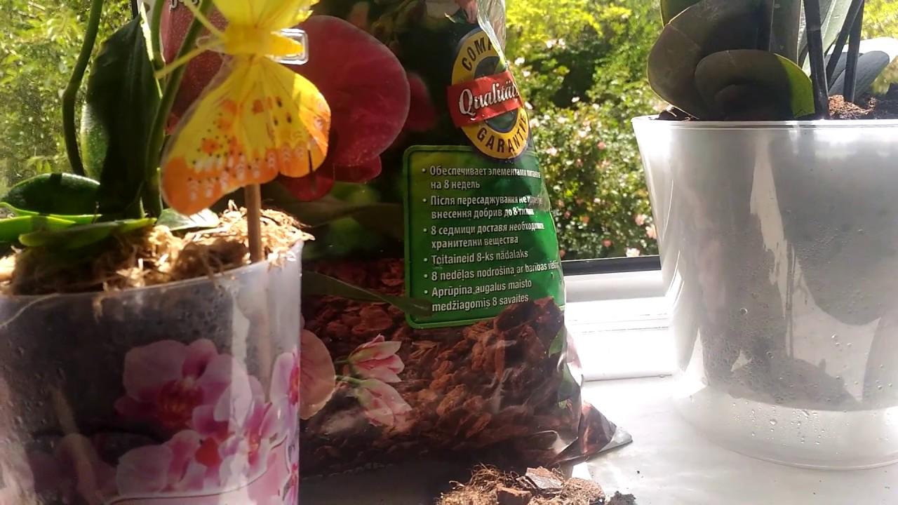 Черная орхидея фаленопсис спец. Сорта. Купить с. Высота измеряется от низа горшка до верха растения, и может немного отличаться от указанной в описании. Орхидея черная. Черную орхидею купить по доступной цене с доставкой по киеву и украине предлагает наш интернет-магазин. В уходе эти.