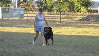 Astor Obedience Training
