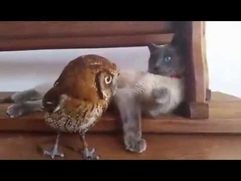 Video - Gatto e gufo... Tenerissimi!