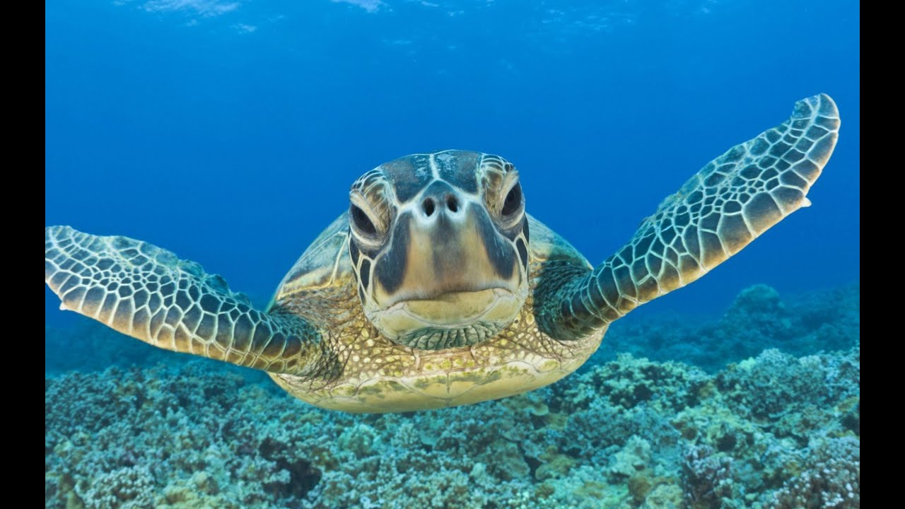 Swimming With Sea Turtles Beautiful Surprises Underwater