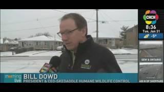 CHCH News Coyotes Jan 31 2017