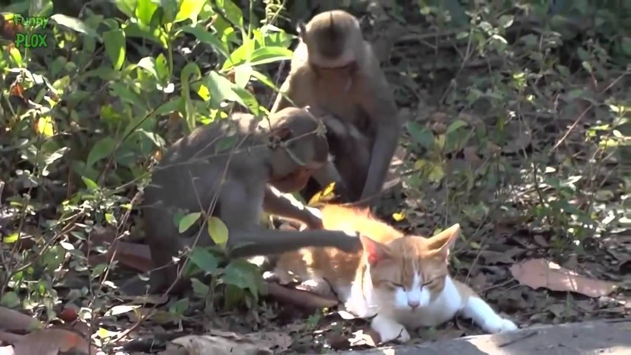 Animal Odd Couples Youtube cute animal odd couples compilation 2014 new hd