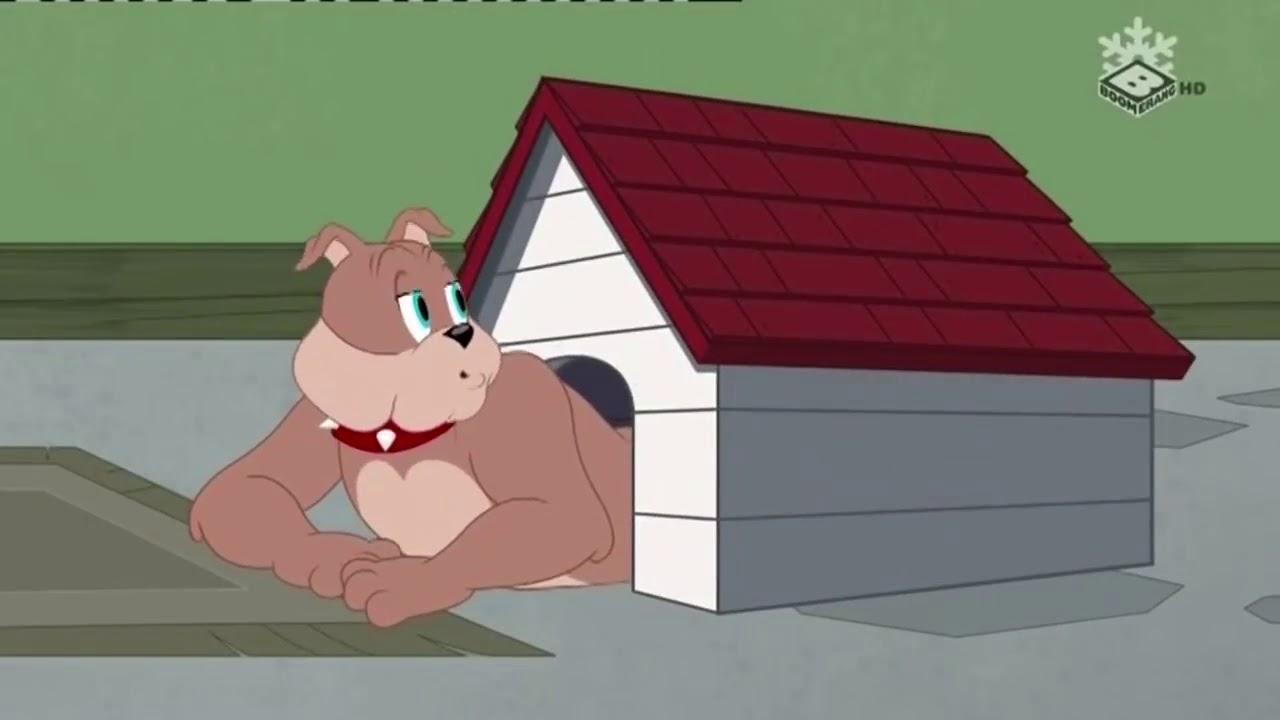 Tom si Jerry ~   Crearea unei bestii   ~ Desene animate traduse dublate in romana