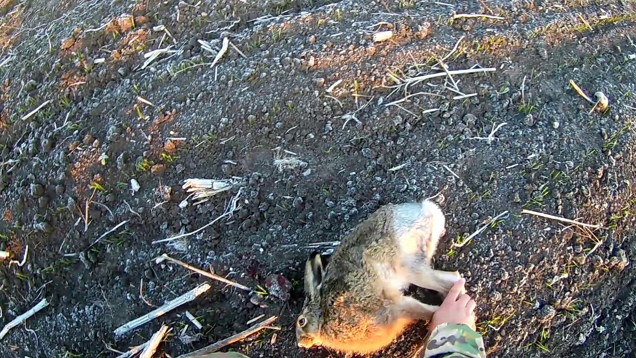 Когда открытие охоты на дичь приморский край осень 2020