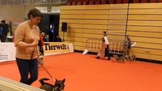 スイスのWinterthurで行われた犬のメッセHUND2014 Präsentation: Västgö...