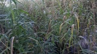Охота на утку с ягдтерьером видео