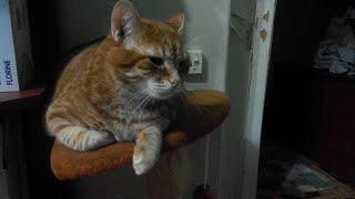 Дом для кота Фили!!!☺