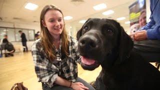 Bristol Uni Has Puppy Cuddles To Relieve Exam Stress