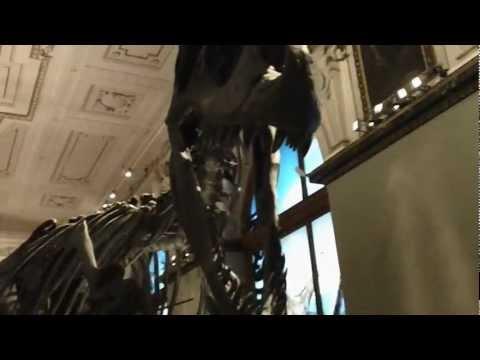 Dinosaur room at the Vienna Museum of Natural History